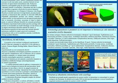 Poster 11 SCDVV Blaj